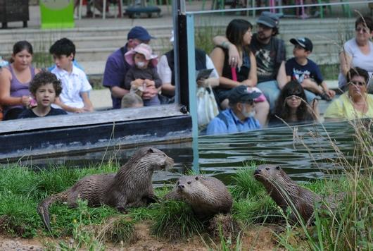 Zoodyssée, parc animalier dans la forêt de Chizé avec plus de 70 espèces animales dont la loutre