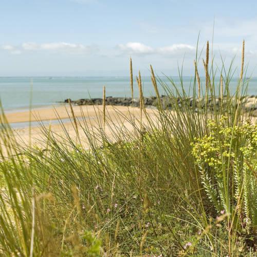 Surfez entre <br> plage et nature