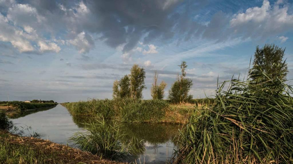 Marais desséché, l'un des paysages du Marais poitevin