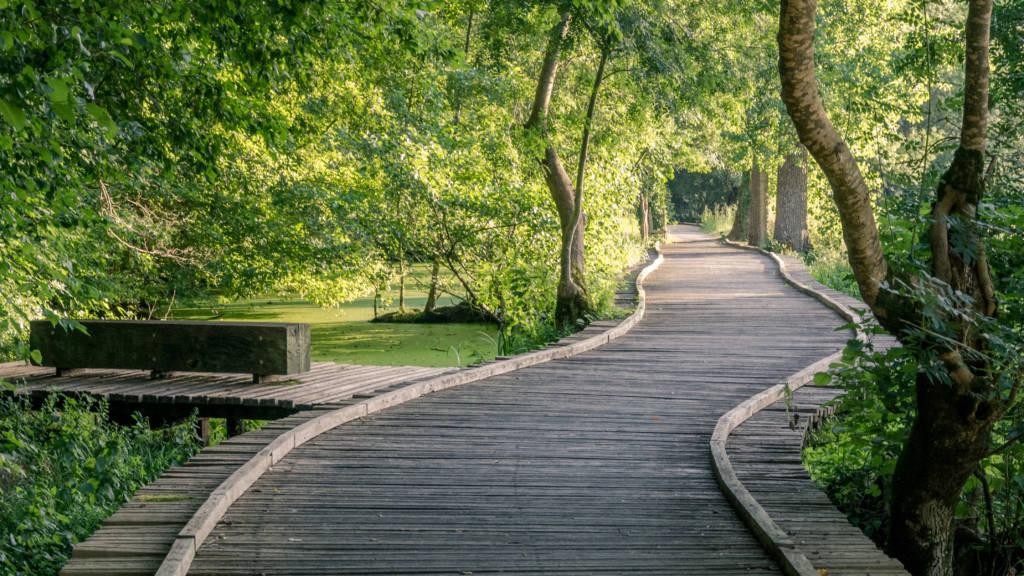 Platelage bois dans les Marais mouillés - sentier cyclable