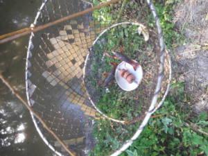 Pêche de l'écrevisse à la balance dans le Marais poitevin