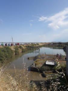 Visite des Viviers d'Arçay à La Faute sur Mer.