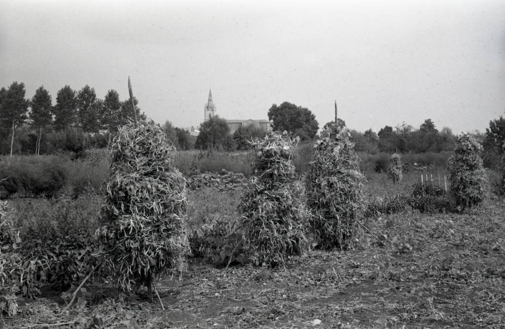 Tourette de mojettes dans le Marais poitevin