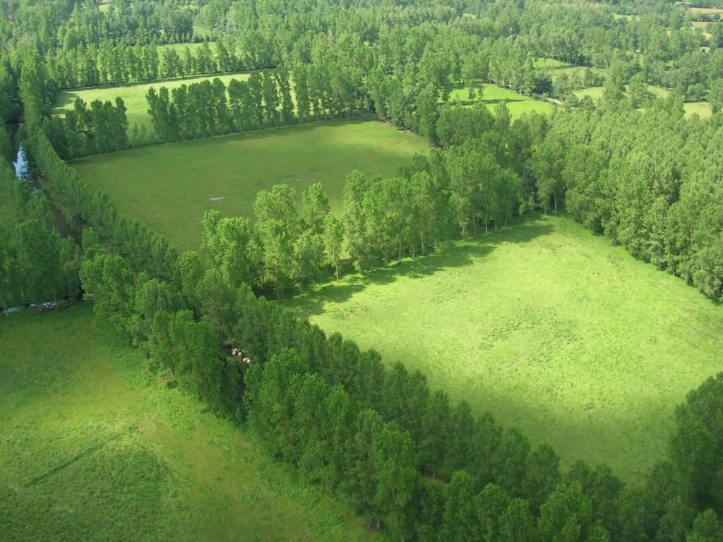 Vue aérienne du marais mouillé bocager