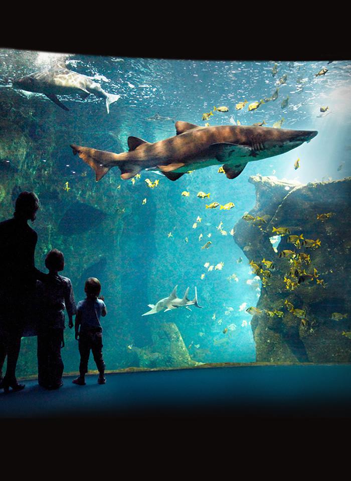 The aquarium of La Rochelle