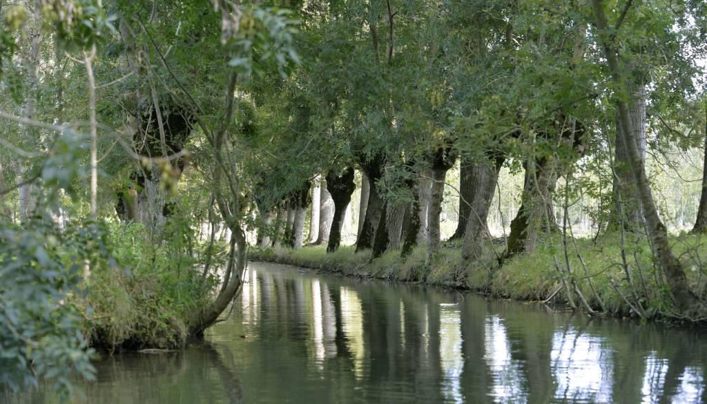 Paysage du Marais poitevin