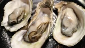 Tasting of oysters at La Faute sur Mer in the Marais poitevin nature régional park