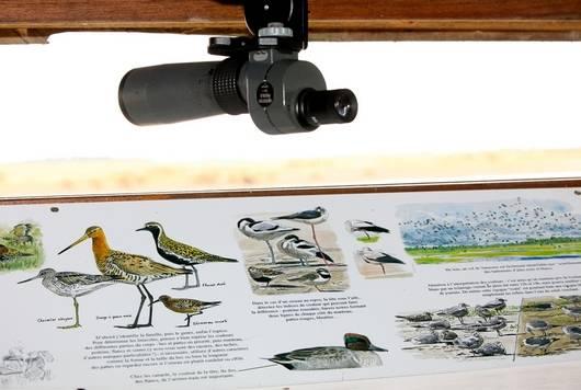 L'observatoire de la Réserve naturelle nationale Michel Brosselin de Saint-Denis-du-Payré dans le marais poitevin. Observatoires abrités accessibles toute l'année, mise à disposition de longues-vues.