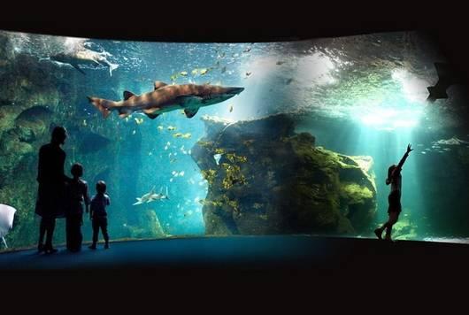 Aquarium de la Rochelle - face au Vieux Port : visitez le cœur des océans, plus de 12 000 animaux marins