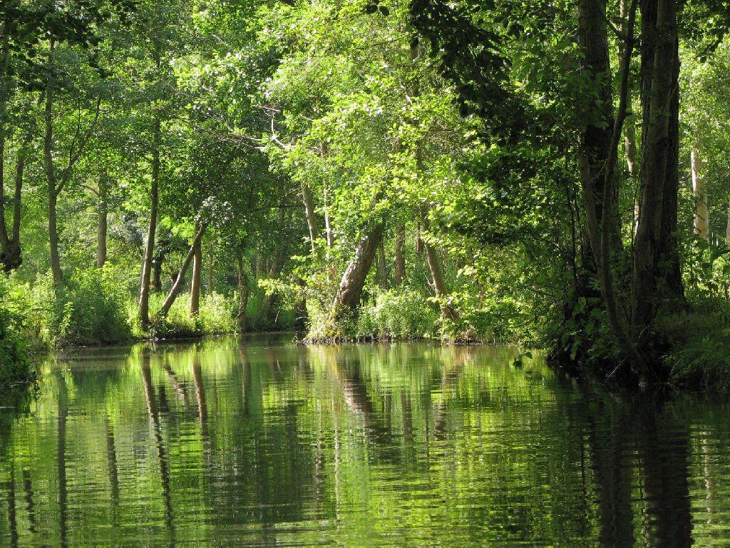 Les Marais mouillés, l'un des paysages du Parc naturel régional du Marais poitevin