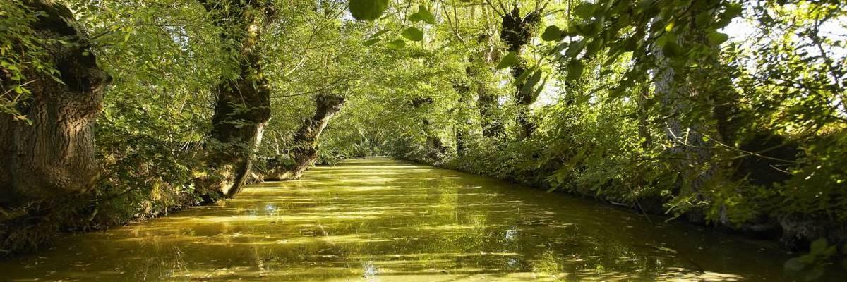Découvrez la Venise verte dans le Marais poitevin