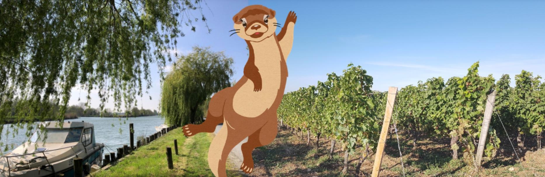 """Baludik """"Ozart entre vigne et marais"""""""